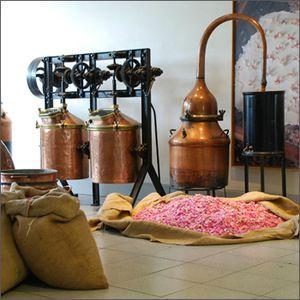 distillationrose