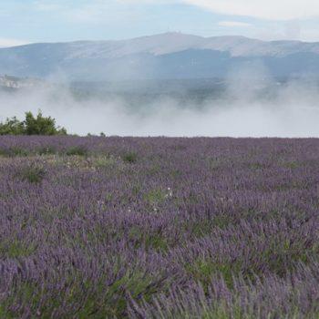 Aromaterapia : historia y definición