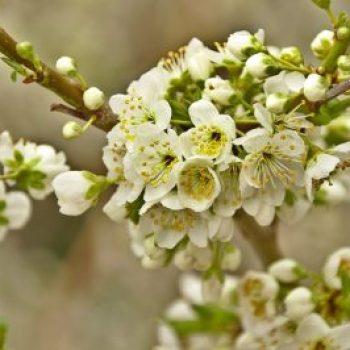 L'aromathérapie et la detox