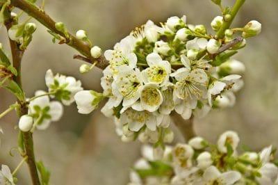 aromatherapie-detox