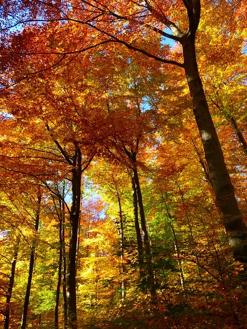 automne-aromathérapie