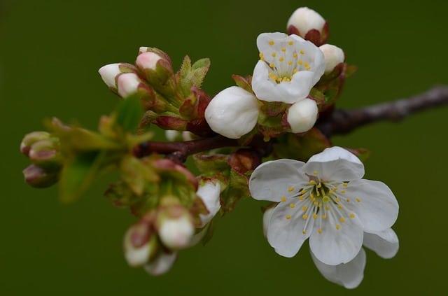 Arrivée du printemps, préparez votre détox