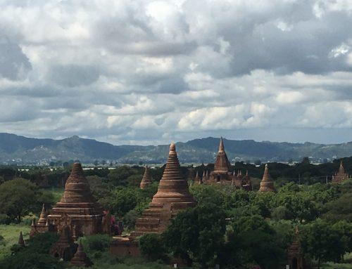 Germination et jeunes pousses, une pépite d'or en Birmanie