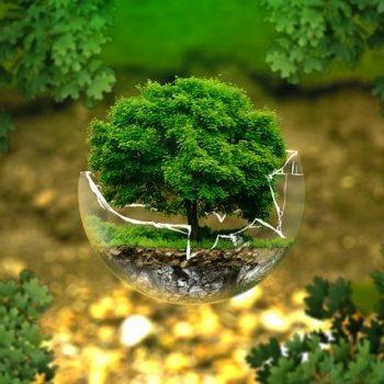 Les effets de l'environnement et la santé